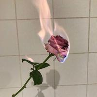 Georgia~Rose