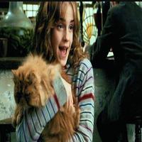 Mira F Granger